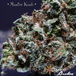 Master Kush- Cannabis Macro Photography by Spurs Broken (Robert R. Sanders)