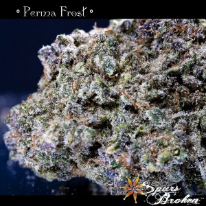 Perma Frost - Cannabis Macro Photography by Spurs Broken (Robert R. Sanders)