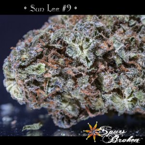Sun Lee - Cannabis Macro Photography by Spurs Broken (Robert R. Sanders)