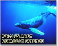 whales-spix-bg.jpg