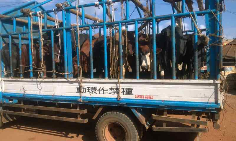 Police Shoots Kajansi Cattle Smuggler As 12 Heads of Cattle Are Rescued