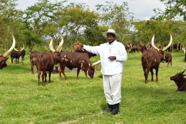 Man Held For Attempting To Burn President Museveni's Kisozi Farm!