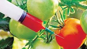 Farmers' Guide With Joseph Mugenyi: Genetically Modified Organisms (GMOs) Sour Secrets Leak