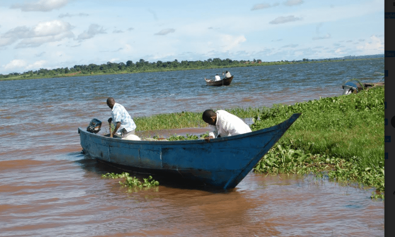 Fishing Business On Lake Albert Stalls As Water Hyacinth Invades Kanara Landing Site