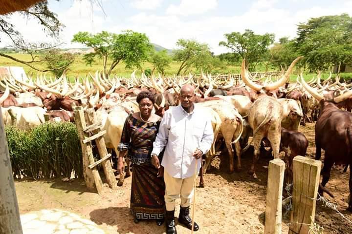 President Museveni Hosts Speaker Kadaga, American Investors At His Kisozi Farm