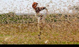 UN Releases $10m To Fight Devastating Locusts As Urgent Action To Save Other E.A Countries