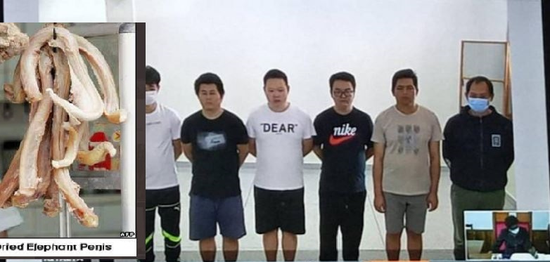 Sexpests: Shame As Chinese 'Investors' Are Charged With Poaching Elephants For Their Penises