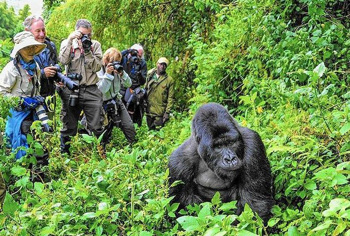 Uganda Tourism Agencies Merge To Boost Industry, Uganda's Economy