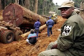 Uganda's Snoring MPs Wake Up, Demand Tougher Enforcement To Curb Deforestation