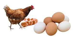 Poultry Farming: Factors To Consider Before Starting The Farm