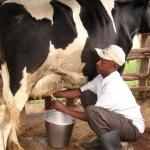 Uganda Dairy Processors Demand Fair Trade Regime In EAC