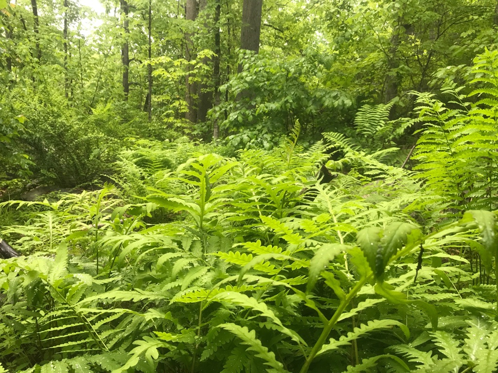Adventure Ecology Finding Your Best Frond An Interactive