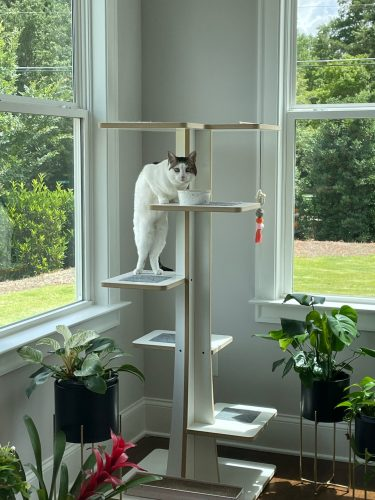 Baobab: Modern Cat Tower photo review
