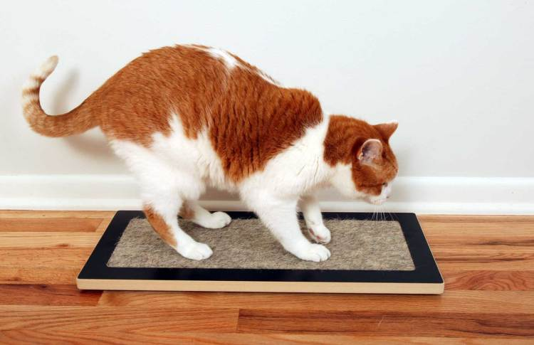 Cat using Lo, the modern Floor Cat Scratcher