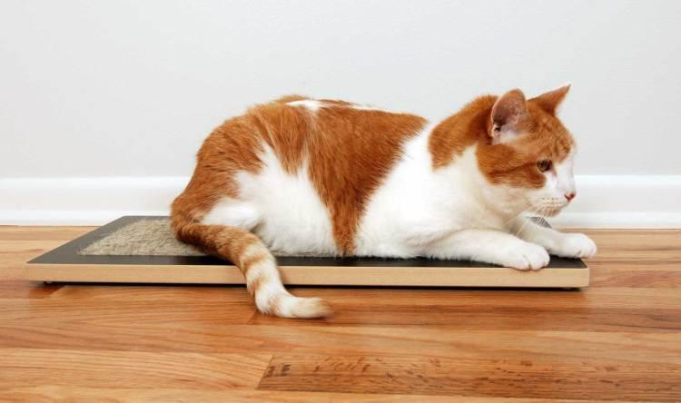 Cat on Floor Cat Scratcher