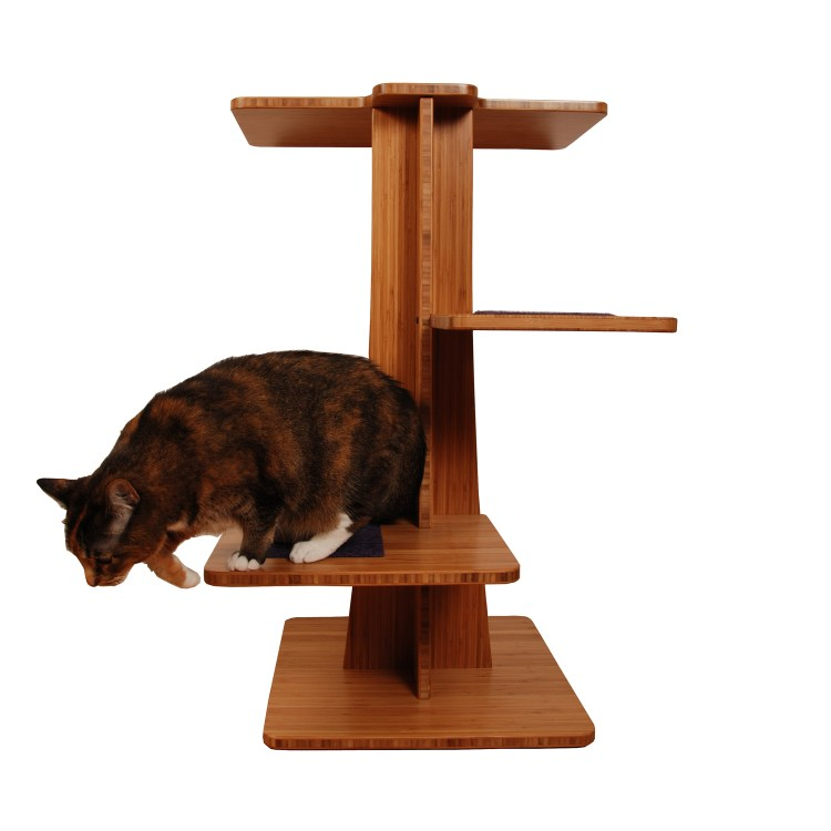 cat plays on modern cat tree Acacia