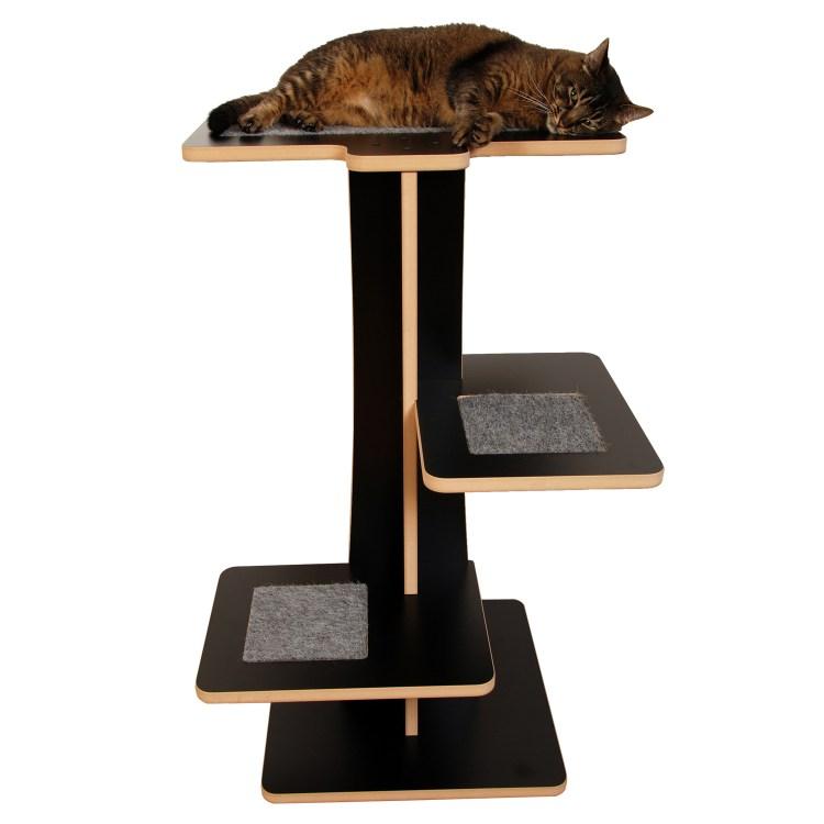 Cat on top of black cat tree