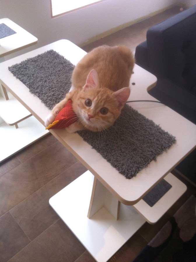 Orange cat playing with organic catnip toy