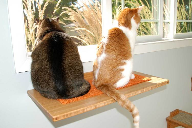 FREMONT CAT WINDOW PERCH with two cats sitting on it