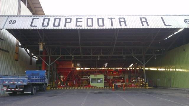 Coopedota