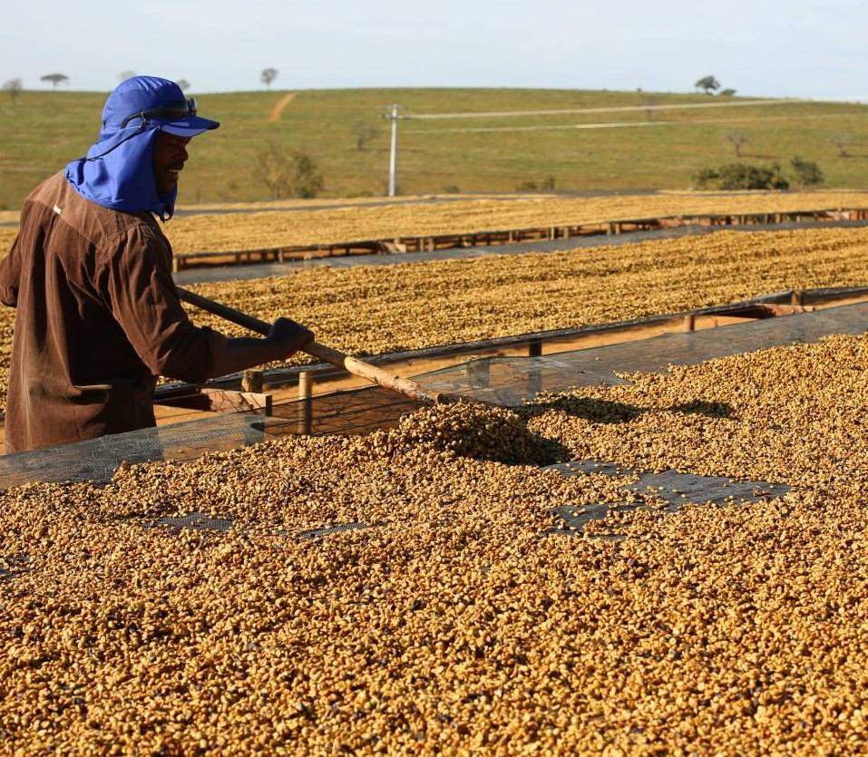 Juliana Armelin: how to start a coffee farm – Square Mile Coffee