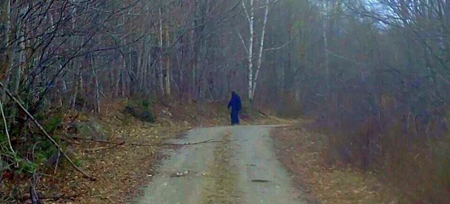 Maine Sasquatch Photographs