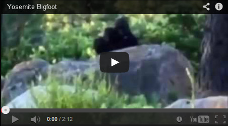Video of Sasquatch parent and child.