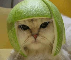 Funny-Cat-Green-Avacado-798184
