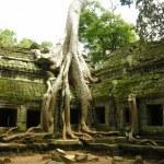 Banyan stablo u Ta Phromu