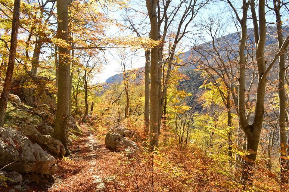 Okrenimo se prirodi: Evo zašto je planinarenje idealan oblik druženja s najbližima