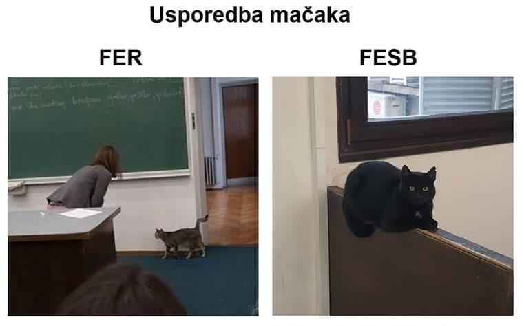 Bitka oko mačkica: FESB-ovci sada tvrde da je njihov ljubimac bolji od onog s FER-a