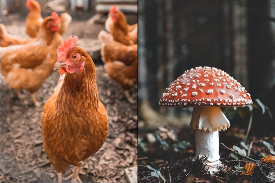 Gljive i kokoši nasmijale maturante na B razini Hrvatskog: 'Nisam još vidjela polazne tekstove iz prirode i društva'
