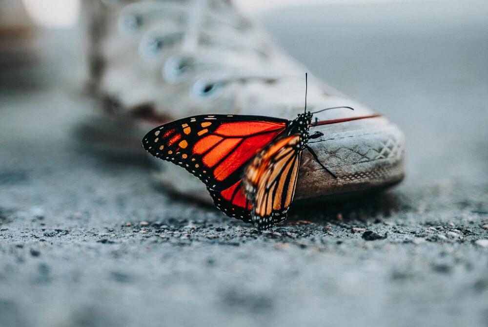 Nakon pisanja B razine Engleskog glavna tema su – leptiri: Maturanti otkrivaju kako im je protekao ispit