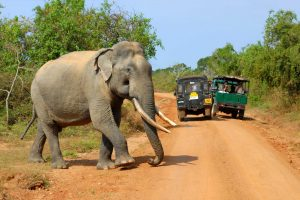 sri lanka yala national park wildlife