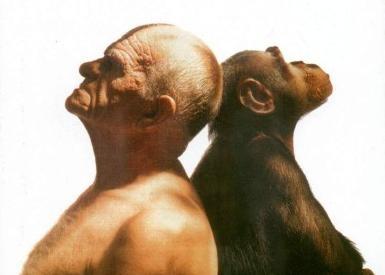 uomo scimmia evoluzione creazione discontinuità
