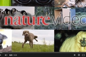 Nature Video 2014
