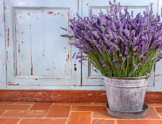 potted lavender on a brick patio