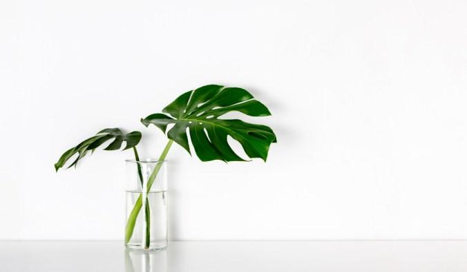 tropical leaves in clear vase
