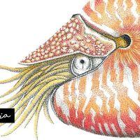 Nautilus, el único cefalópodo con concha