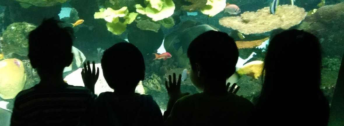 Four children looking into an aquarium