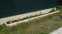 花壇に花や木が植えられました