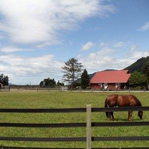 Double SS Quarter Horses