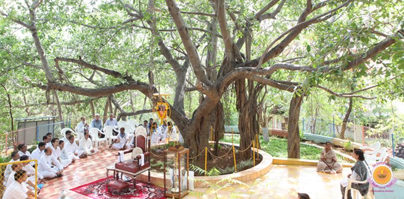 Meditation Tree @ 54