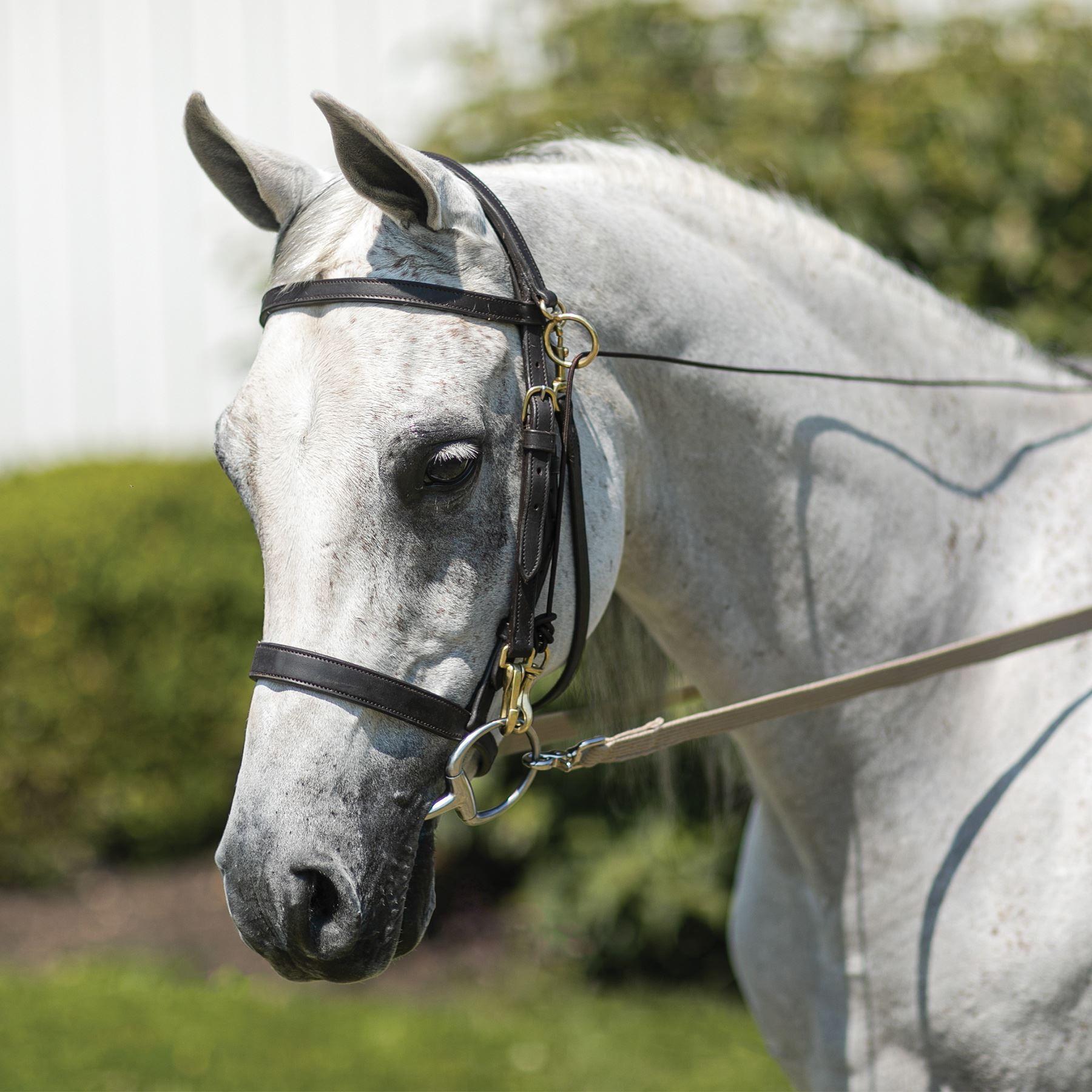 Billy Royal Arabian Sidecheck Training Bridle In Billy