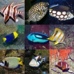 أسعار الأسماك اليوم الأحد 22-1-2017 فى مصر