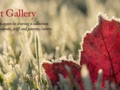 Winter-Gallery