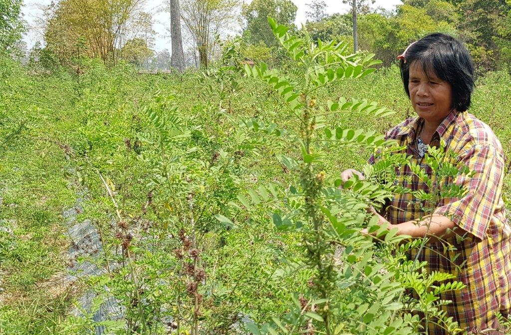 Indigo planten zorgen voor blauwe verf