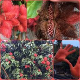rode kleurstof uit de natuur