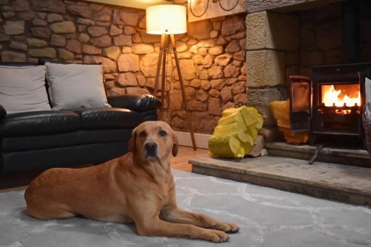 Dog-friendly holiday cottages northumberland