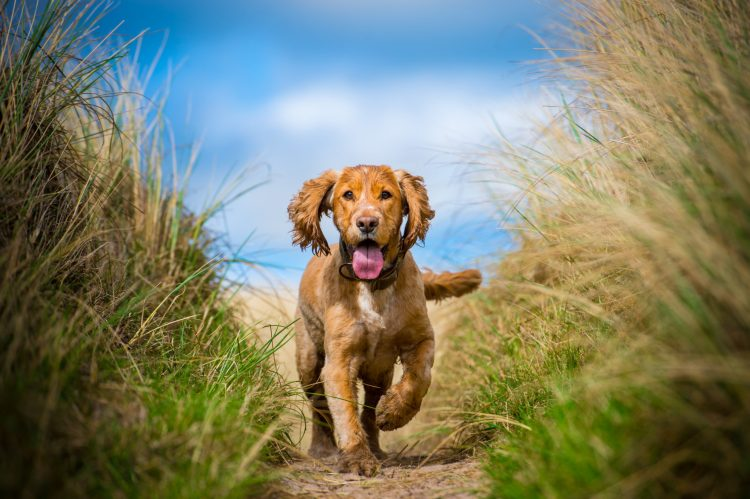 Dog-friendly holiday cottage in Northumberland